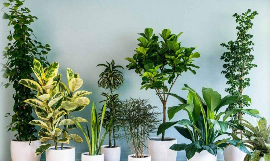 Ev bitkileri havayı temizliyor mu?