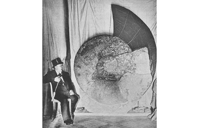 Parapuzosia seppenradensis, bilinen en büyük ammonit türüdür.
