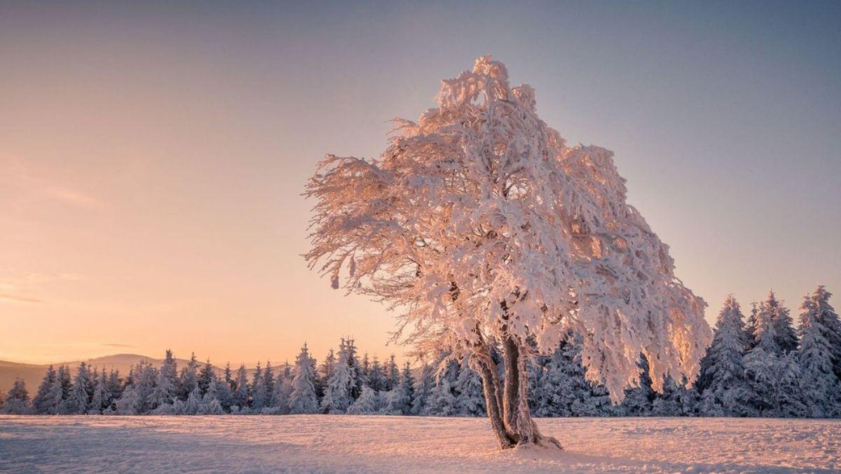 Ağaçlar kışın nasıl hayatta kalıyor?