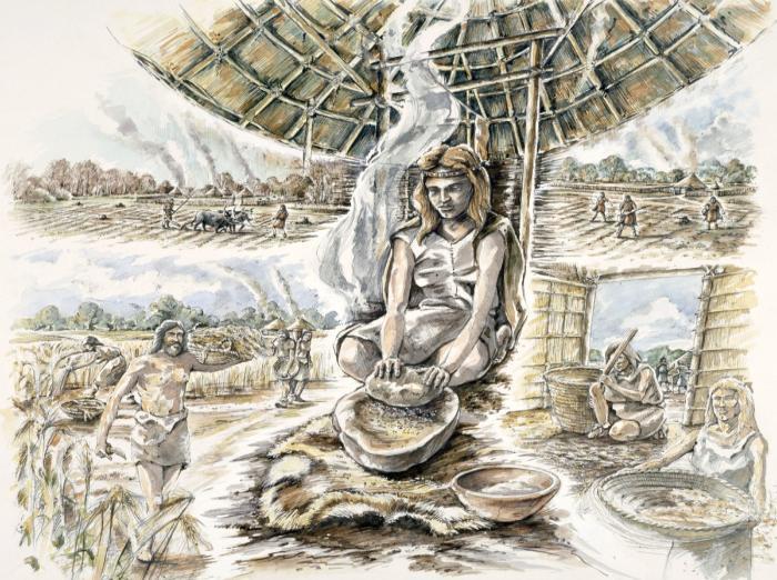 Neolitik Çağ tahıl üretimi.